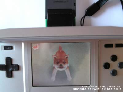 Nintendogs NDS Rom (DS & GBA_Save)